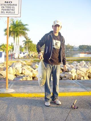 Especies del Caribe Mexicano, el Jurel